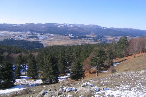 Monte Volpintesta - Parco Nazionale della Sila
